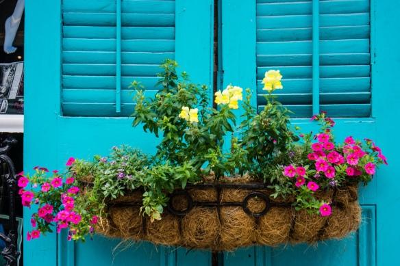 New Orleans çiçek dolu